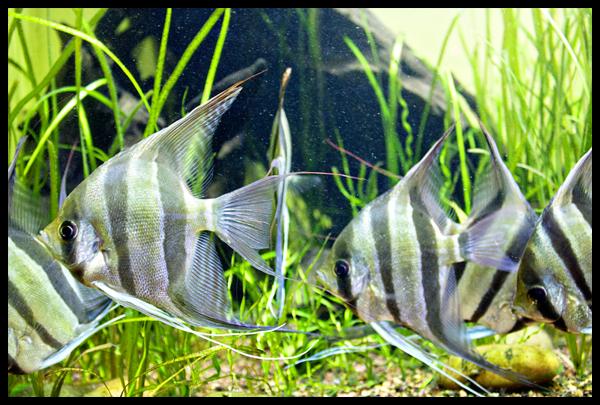 Fish Academy of Sciences