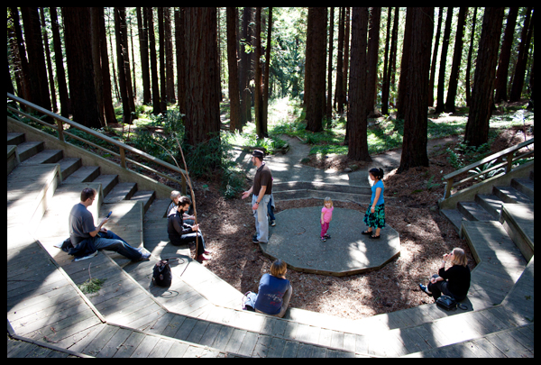 Redwood Grove Berkeley Botanical Gardens