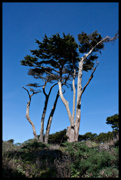 Lands End Trees