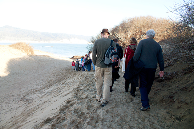 Guided walk to see elephant seals