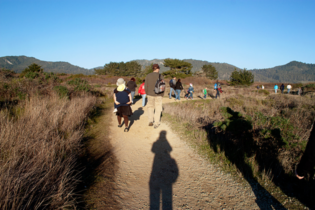 Guided walk to see elephant seals at Ano Nuevo